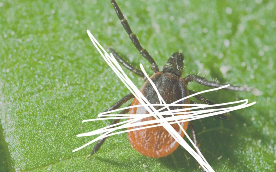 Wondering How to Stop Ticks? At Kinder Spray, We Do it Naturally.
