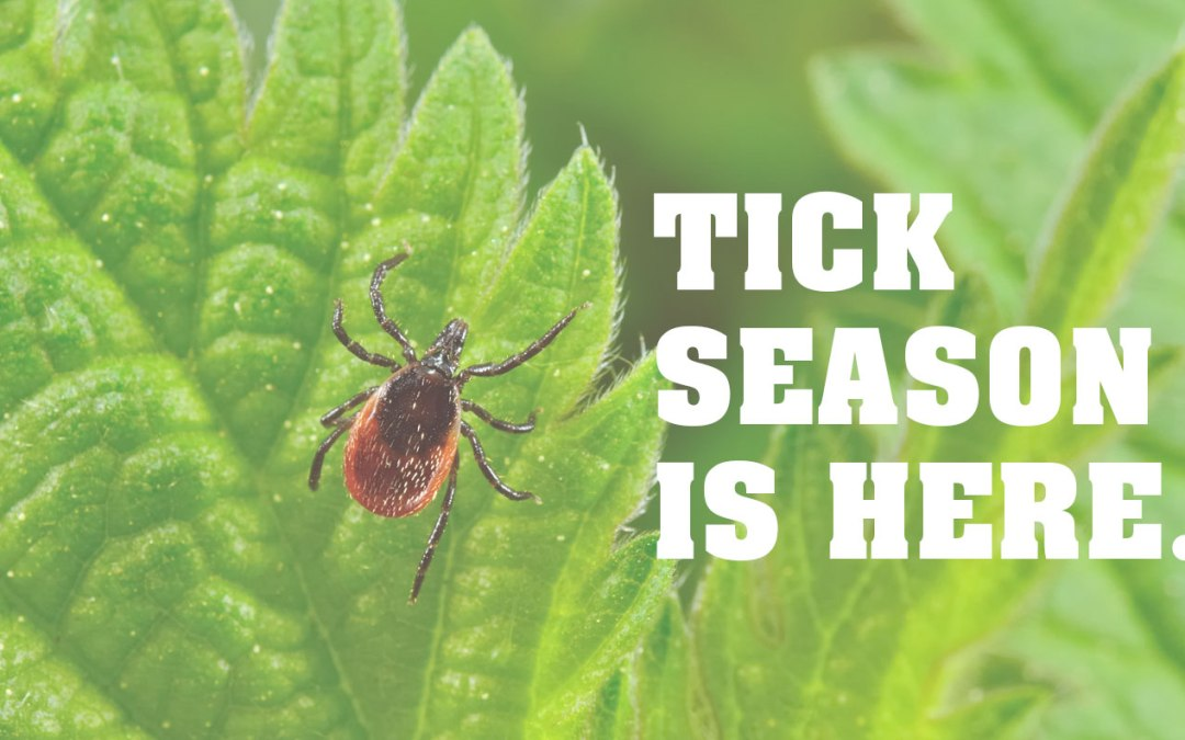 Tick Season: How to Protect Yourself from Ticks This Spring and Summer