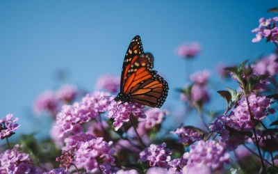 Summer Lawn Care That Protects the Pollinators