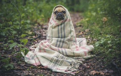 Stay Alert for These Signs of Lyme Disease in Dogs