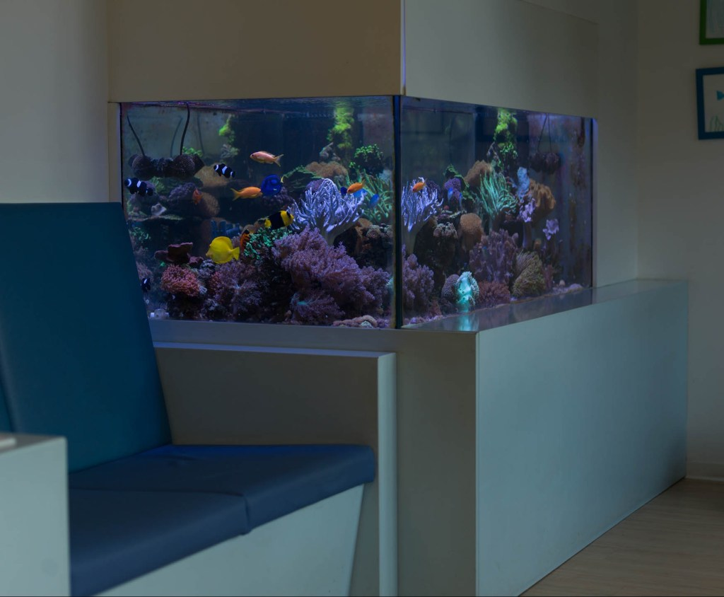 Aquarium Kinderzahnarztpraxis Brun Potsdam