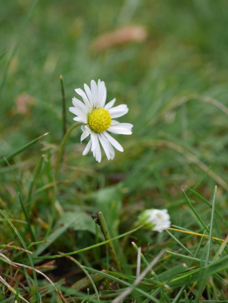 daisy six on saturday