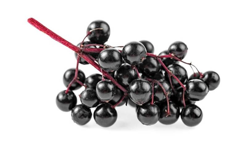 Recipe for Elderberry Syrup Using Fresh and Dried Elderberries