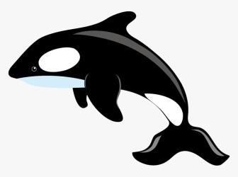 Killer Whale Blue Whale Clip Art Killer Whale Clipart Png Transparent Png kindpng