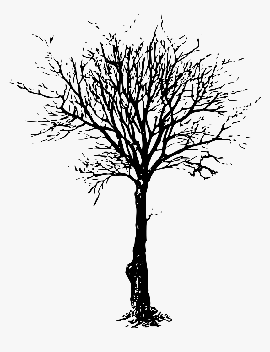 Aesthetic Tree Drawing : aesthetic, drawing, Branch, Drawing, Transparent, Kindpng