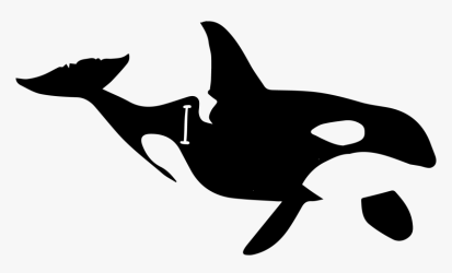 Sperm Whale Clipart Regular Beluga Whale Killer Whale HD Png Download kindpng