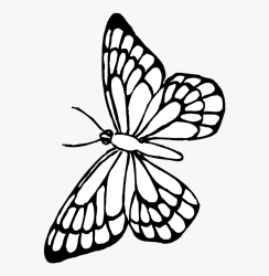 Transparent Butterfly Outline Clipart Free Printable Butterfly Coloring Pages HD Png Download kindpng