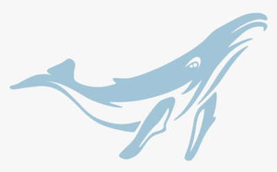Cetacea marine Mammal whale blue Whale dolphin common Transparent Background Blue Whale Png Png Download kindpng
