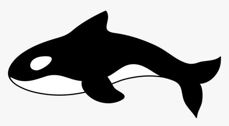 Com Orca Killer Whale Clipart 1 Clipart HD Png Download kindpng