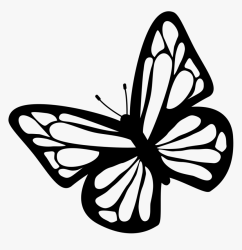 Butterfly Black And White Clipart Download Free Images Butterfly Clipart Black And White HD Png Download kindpng