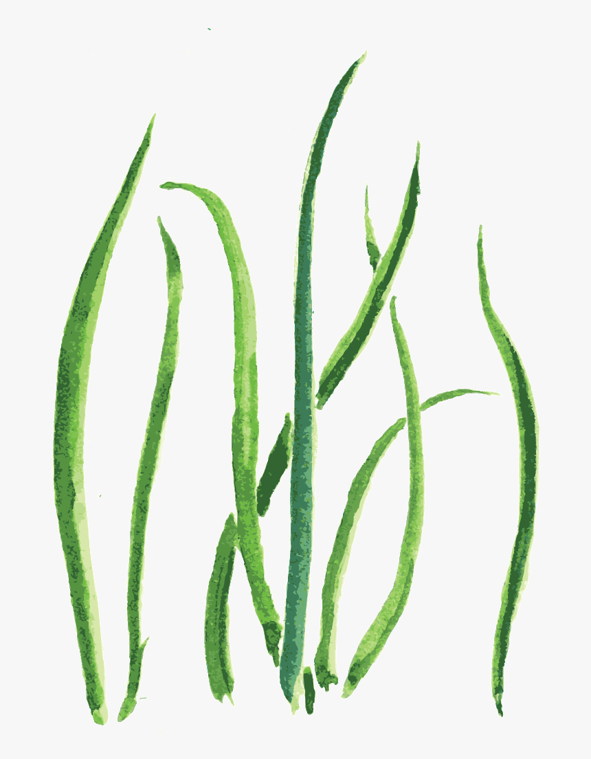 Cartoon Grass Png : cartoon, grass, Green, Grass, Cartoon, Transparent, Sketch,, Download, Kindpng