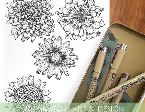 chrysanthemum mum botanical illustration