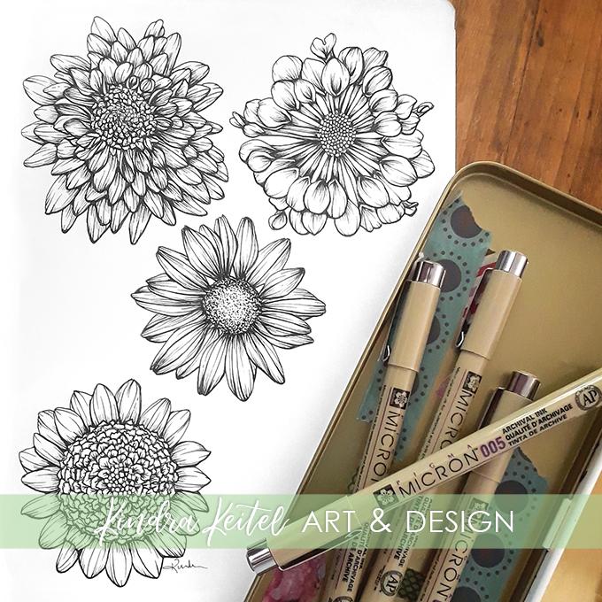 chrysanthemum mum botanical illustration