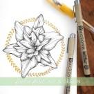 daylily lily botanical illustration