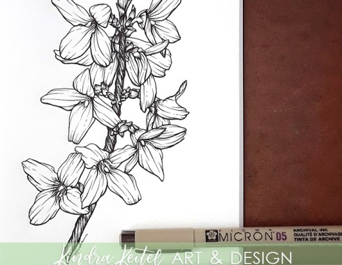 forsythia botanical illustration