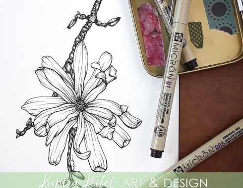 star magnolia botanical illustration