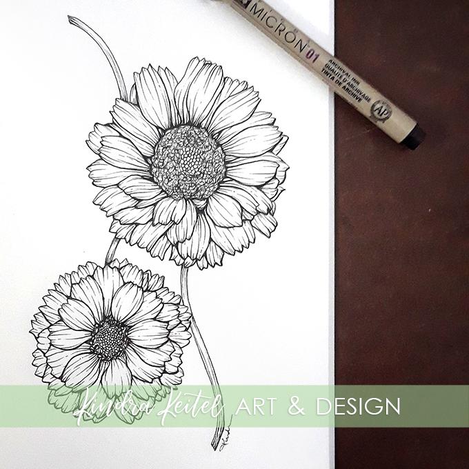 desert marigold botanical illustration