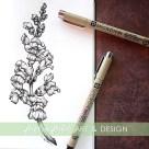 snapdragon botanical illustration