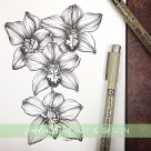 orchid botanical illustration