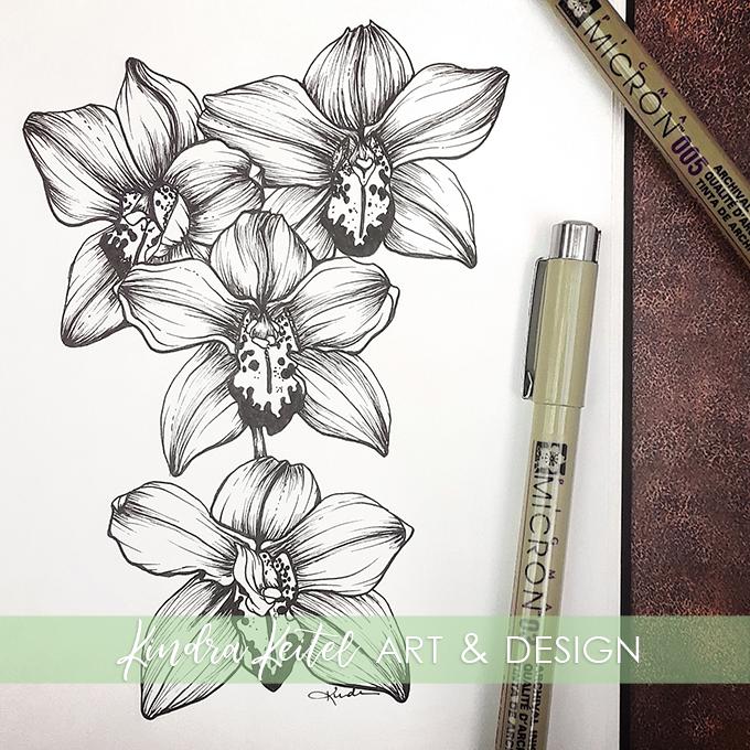 orchid botanical illustration