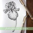 bearded iris botanical illustration
