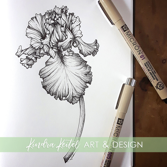 bearded iris botanical illustration
