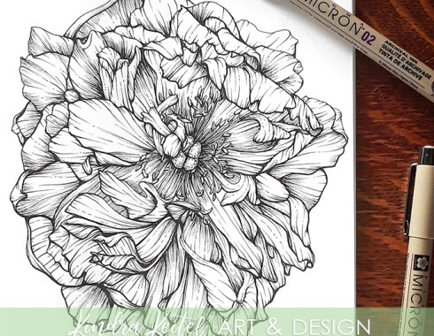 peony botanical illustration