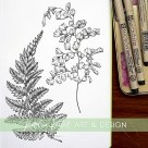 fern botanical illustration