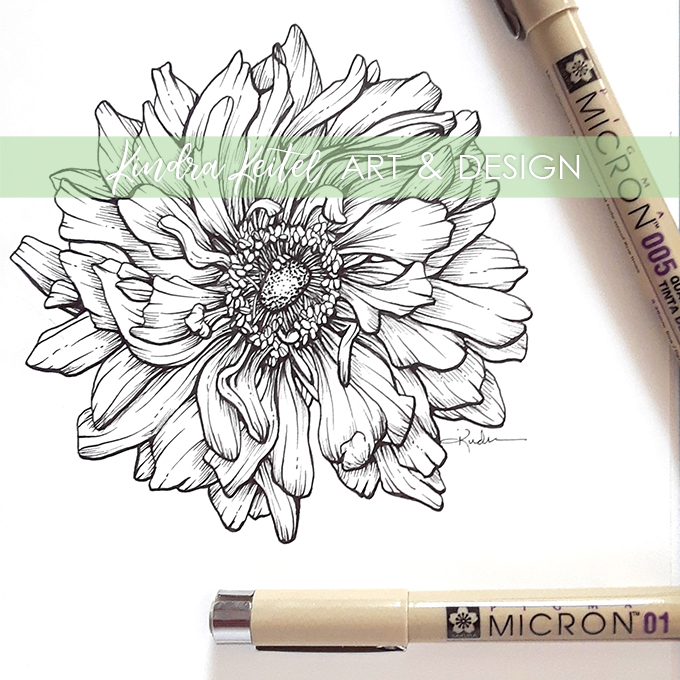 anemone botanical illustration