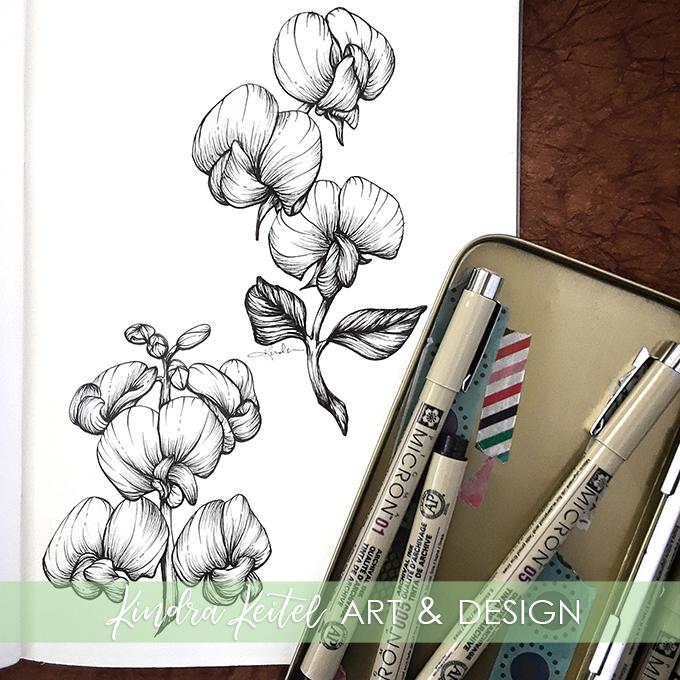 sweet pea botanical illustration