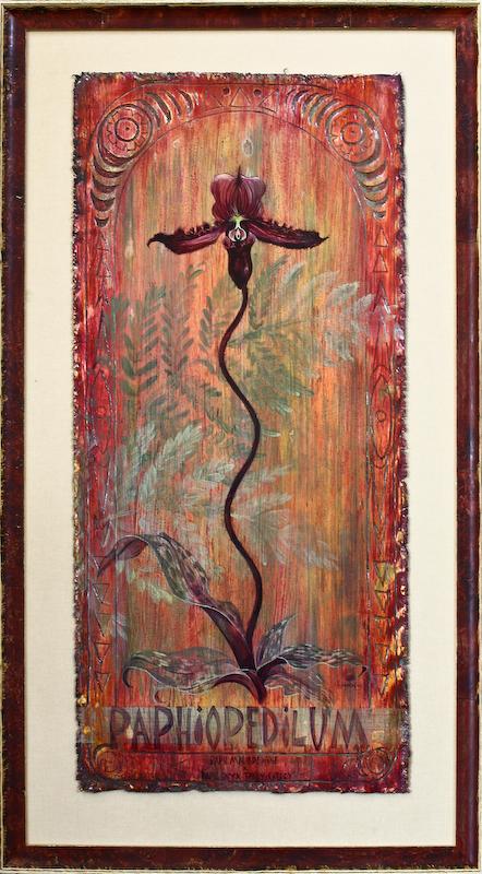 Paphiopedilum by Lucinda Hayes