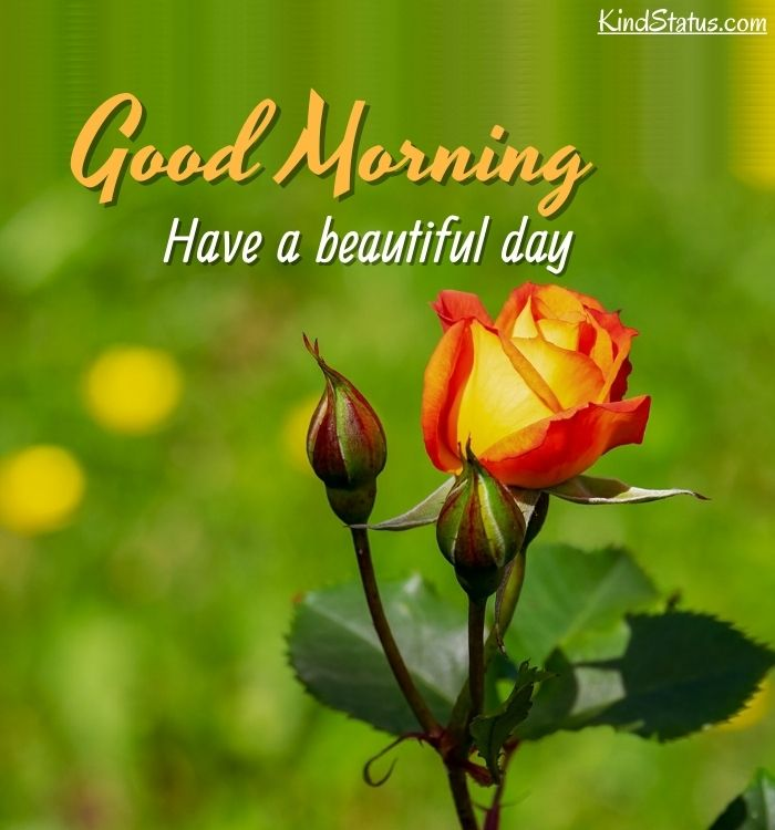good morning beautiful picture