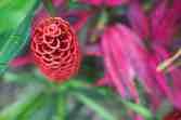 Costa Rica_Botanicals