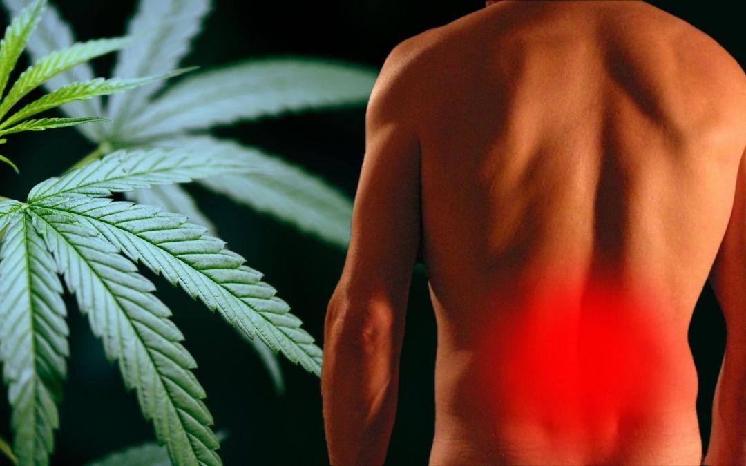 Le CBD aide-t-il à soulager des douleurs liées à la spondylarthrite ankylosante?