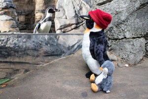 Perry and junior at the penguin exhibit