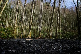 Black Forest [29,930,000 tons]