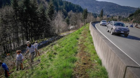 If you live in the Issaquah Highlands you can thank KC Parks and Americorps for your lack of invasives