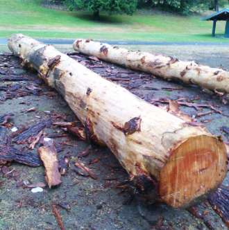 30-foot logs from a Douglas Fir removed from Lakewood Park for safety reasons