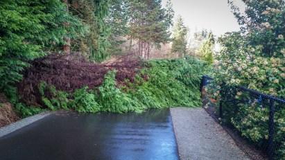 Burke-Gilman before fallen tree removal