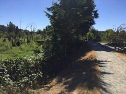 North Creek Trail unpaved-watershed