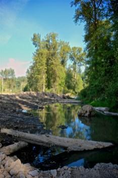 Woody debris for new habitat