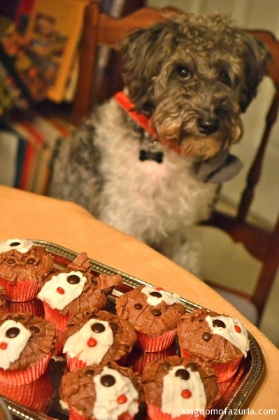 schnoodle pupcakes puppy party