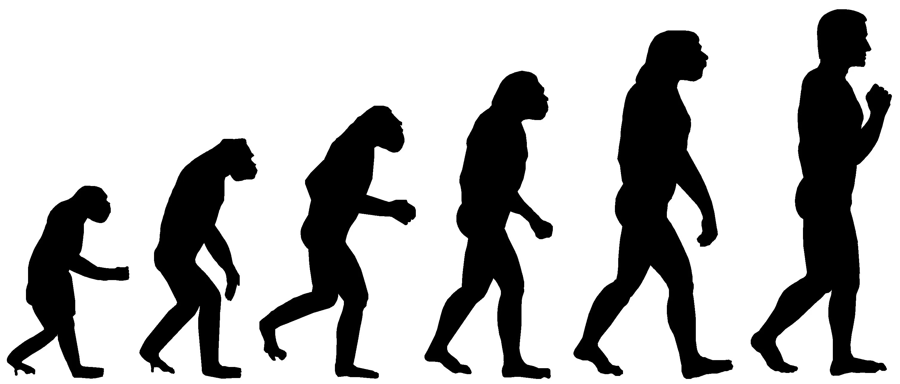 Evidence Of Evolution The Science Herald