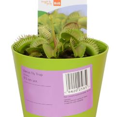 Play Kitchens For Sale Installing Kitchen Countertop Verve Venus Fly Trap In Plastic Pot | Departments Diy At B&q