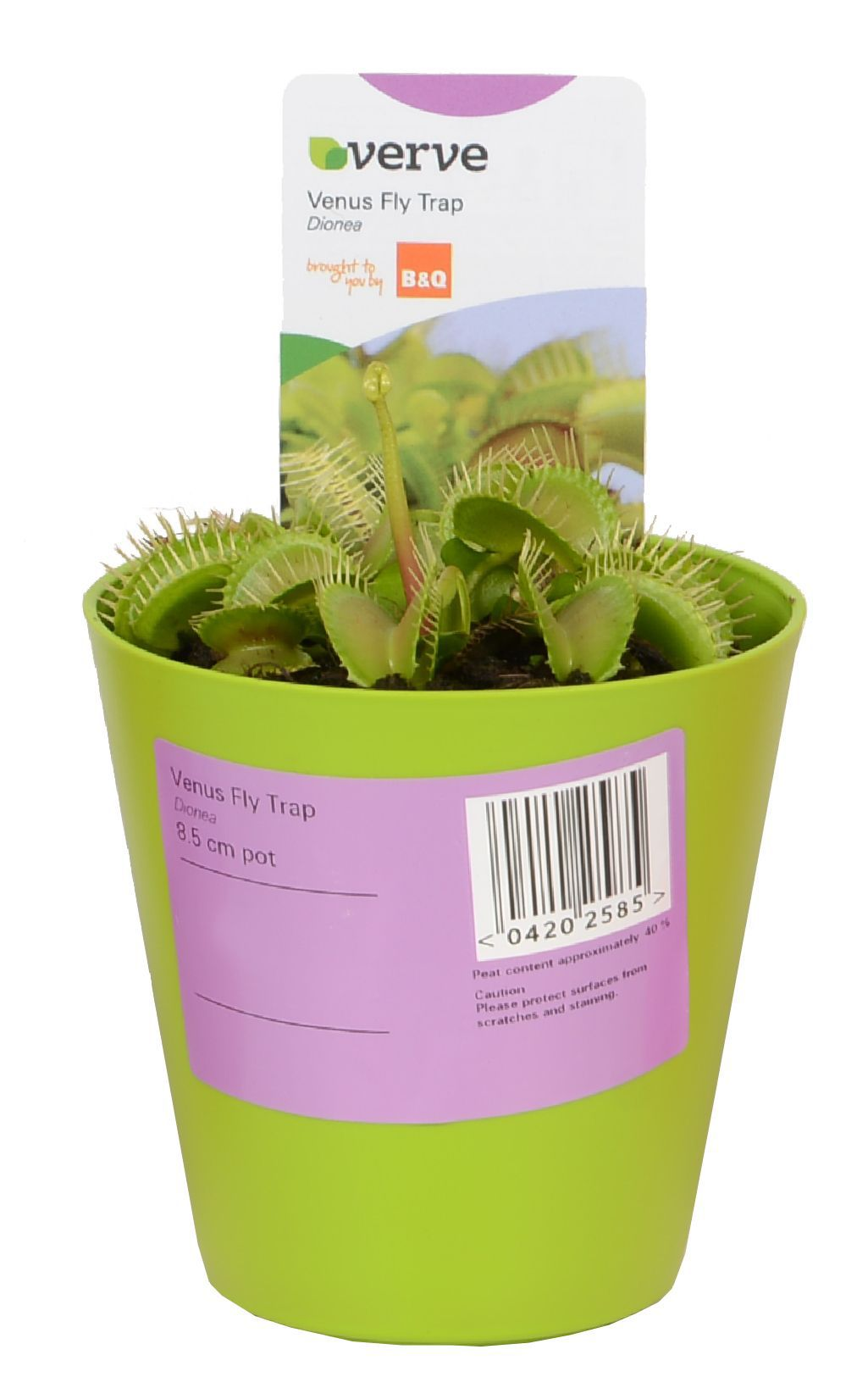 play kitchens for sale outdoor kitchen sink station verve venus fly trap in plastic pot | departments diy at b&q