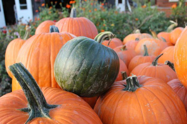 Green Pumpkin in Orange pumpkins