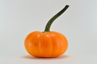 Mini pumpkin white background