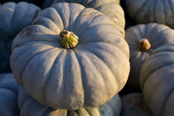 What does a blue pumpkin mean