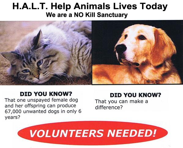 kingman-AZ-HALT-animal-adoption-Animal-Rescue-Volunteers-Needed