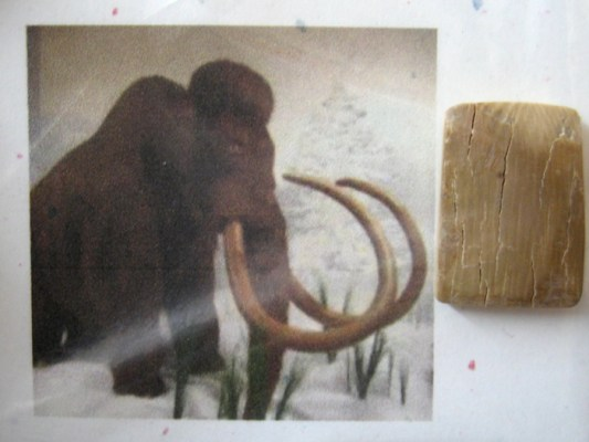 Nature-of-Things-Woolly-Mammoth-Tusks